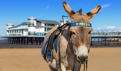 Visit Weston-super-Mare donkey beach Grand Pier sunny sand