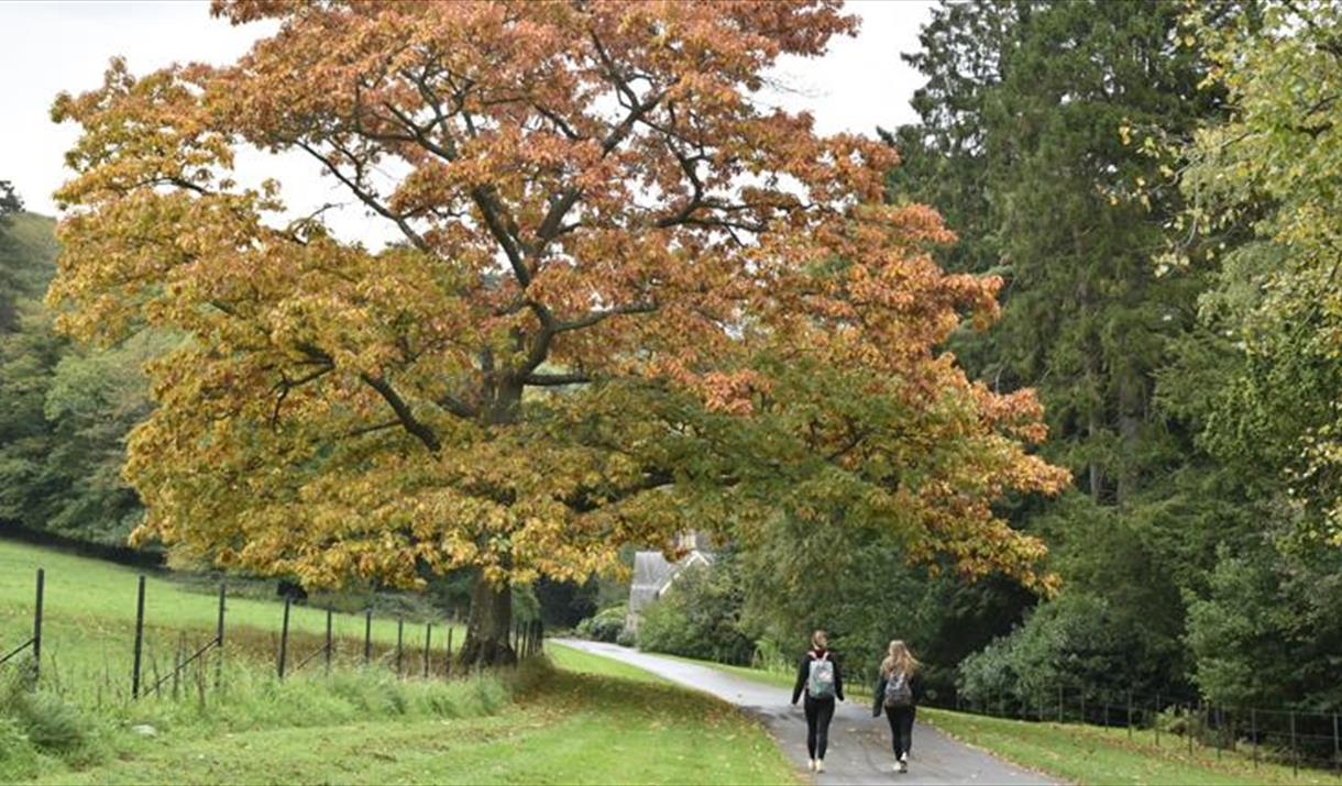 Autumn sketching tours at Tyntesfield